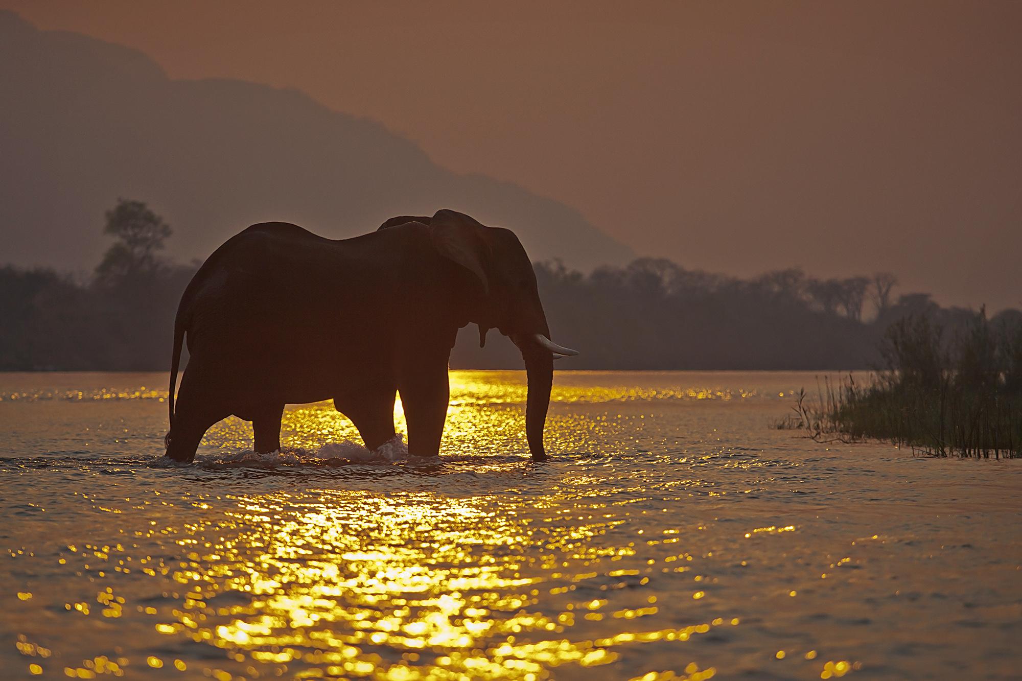 Zambezi Crossing